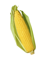 Large maize istock 000023534068 large